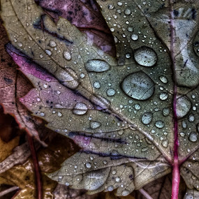 by Jeffrey Goodman - Nature Up Close Leaves & Grasses ( fall leaves on ground, fall leaves )