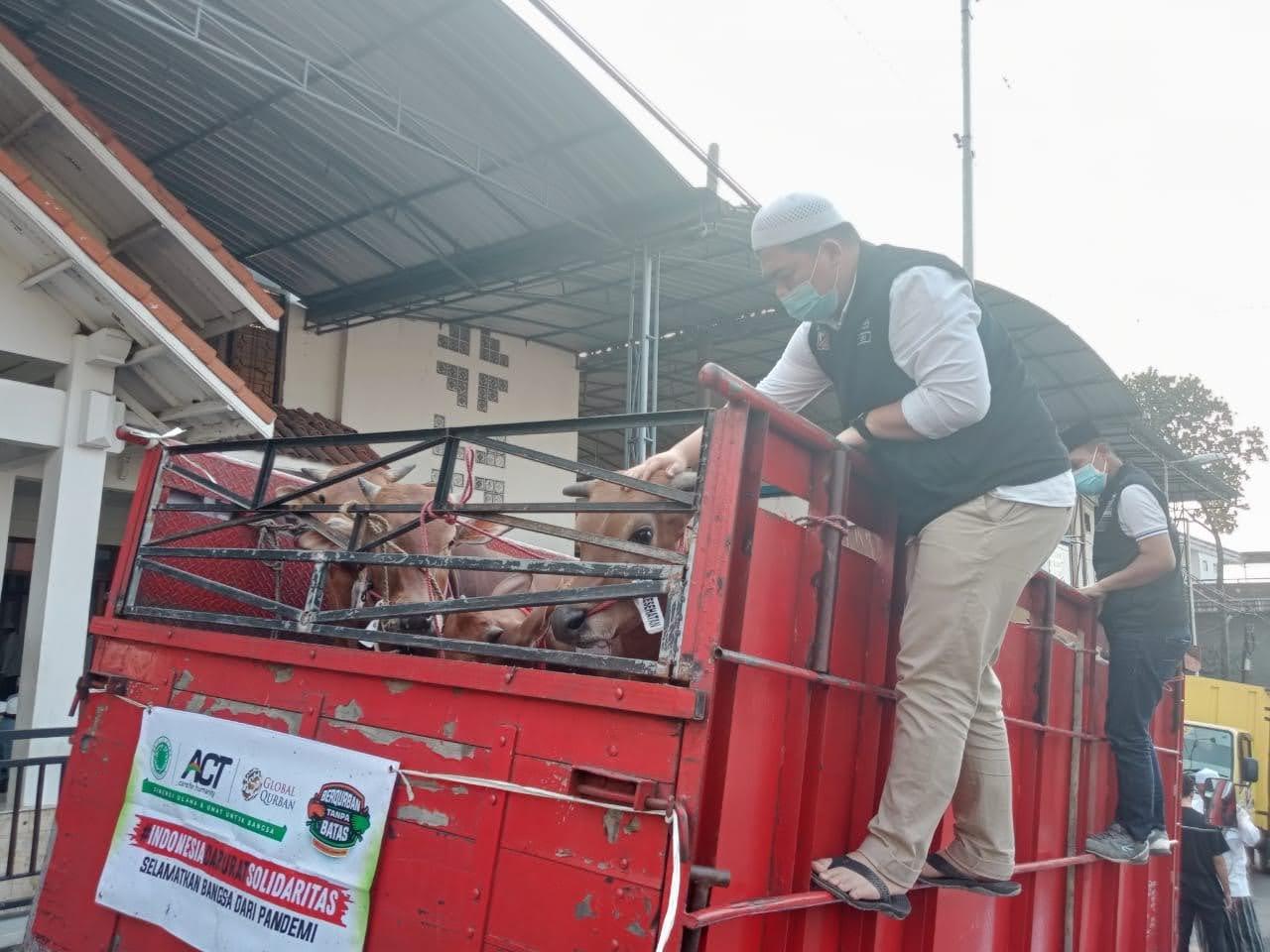 ACT Dan MUI Distribusikan 1000 Sapi Qurban dan Pangan Gratis Se- Jawa-Bali