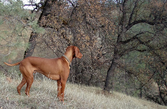Photo: Royce at Cache Creek Wildlife Area, Redbud Trail.