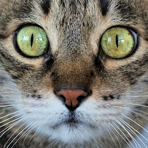Cat green eyes..JPG