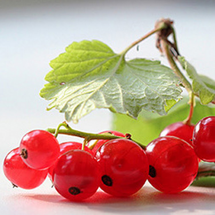 Red Currant - 30ml Alcohol-free Perfume