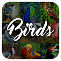 Bird Encyclopedia icon