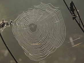 Photo: 26 Aug 13 Priorslee Lake Could almost use this as a maze. (Ed Wilson)