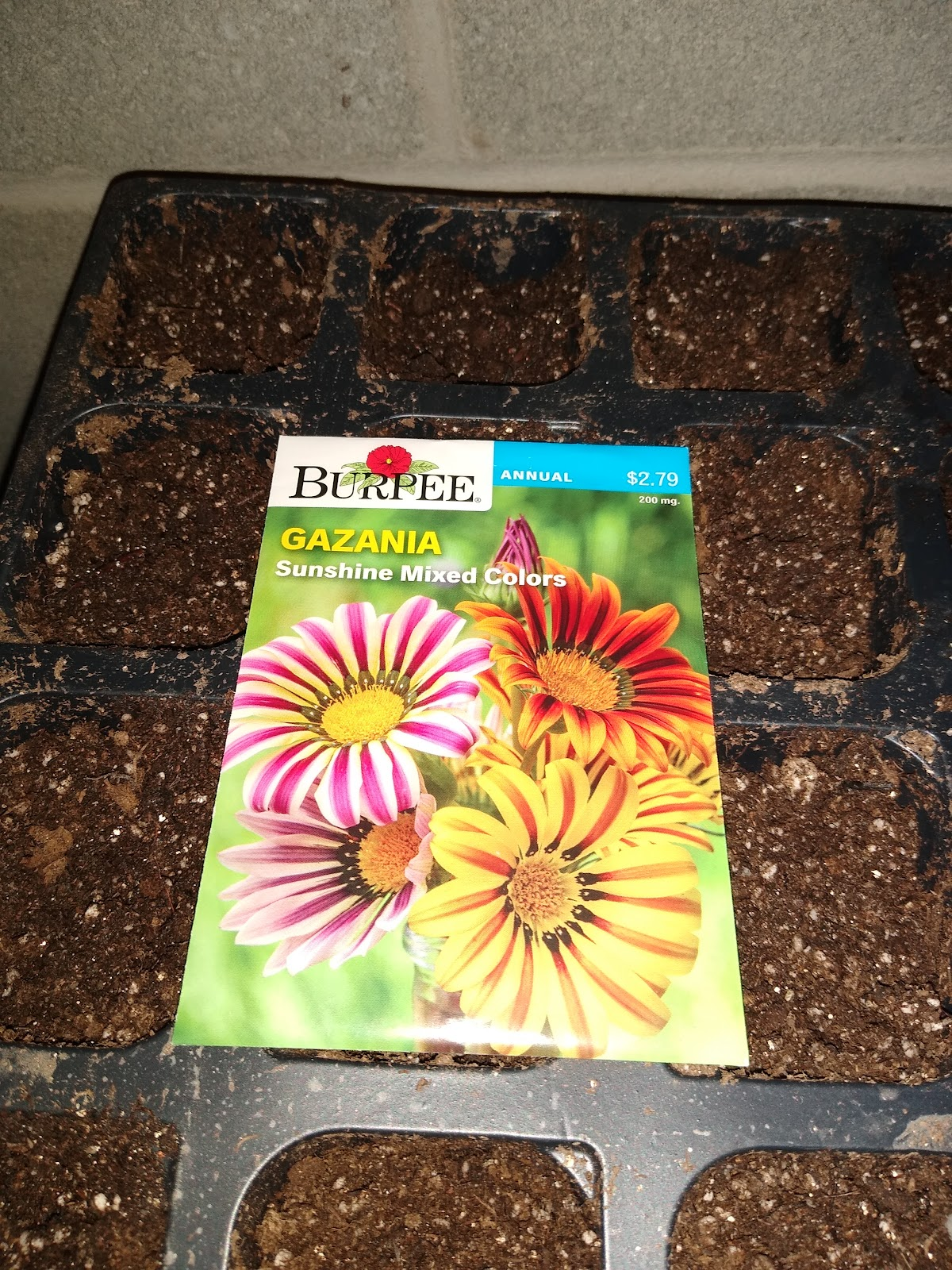 gazania seed packet picture