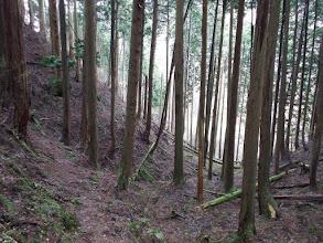 すぐ下に林道