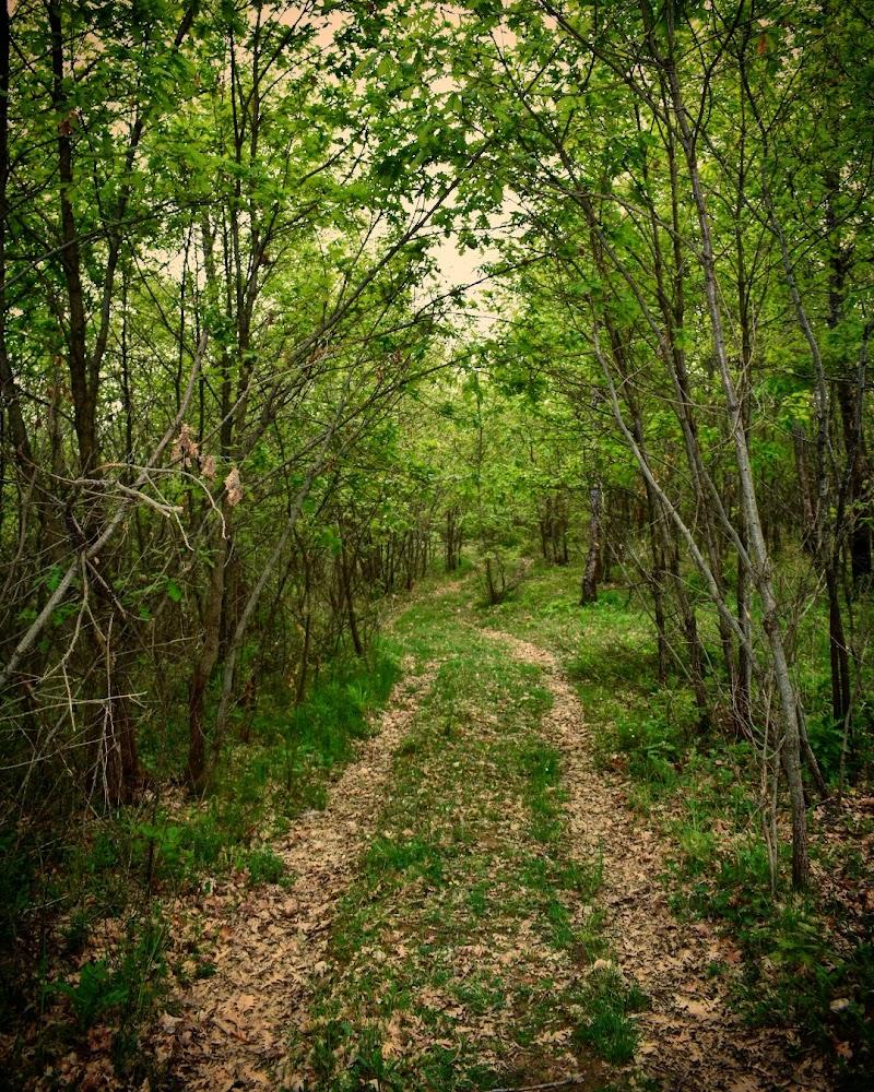 Il sentiero dei grilli solitari di mariateresa_sasso