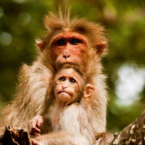 by Mahesh Thiru - Animals Other Mammals