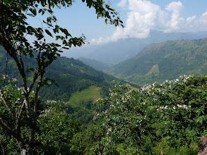 Photo: Quiétude de la végétation dans les collines népalaises