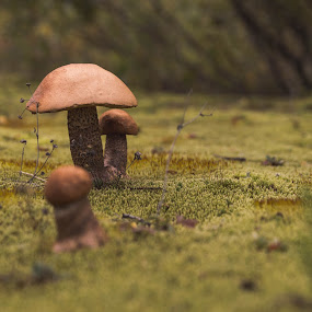 Small but Mighty by Mikahla Dorey - Nature Up Close Mushrooms & Fungi ( mushroom, fungi, nature, moss )