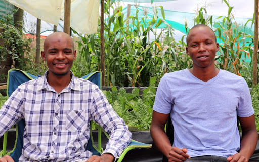 Innovative duo's hydroponic farming method the best