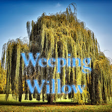 Photo: Weeping Willow