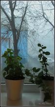 Photo: vedere in ceata de la geamul meu - 2017.12.26