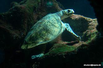 Photo: Aquarium, La Rochelle, Charente Maritime, Frankreich