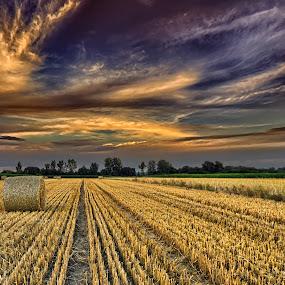 by Manuela Dedić - Landscapes Prairies, Meadows & Fields (  )