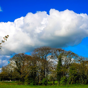 Lurking above  by Raymond Fitzgerald - Landscapes Cloud Formations ( cloud, sky, tipperary horse and jockey, trees )