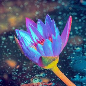 by Carol Bidwell - Flowers Single Flower