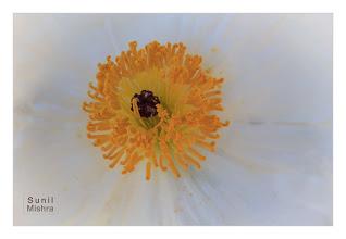 Photo: Eastern Sierras-20120717-651