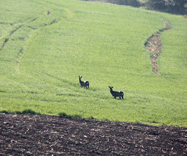 Photo: Day 24 - The Deer in the Distance!