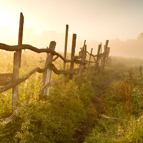 Dawn fog by Mykhailo Mykulyak - Landscapes Prairies, Meadows & Fields ( countryside, colorful, land, plants, marsh, shining, through, rushes, protecting, farm, grasses, nature, damp, tree, conservation, moist, misty, swamp, water, protection, diffused, green, morning, sunlight, rural, country, foggy, environment, color, wetlands, fog, horizontal, grasslands, fen, reeds, mist )