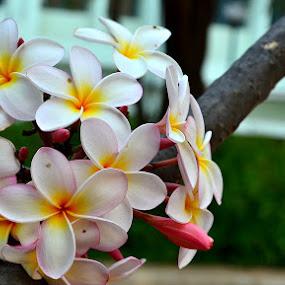 beautiful by Vijayendra Venkatesh - Nature Up Close Flowers - 2011-2013
