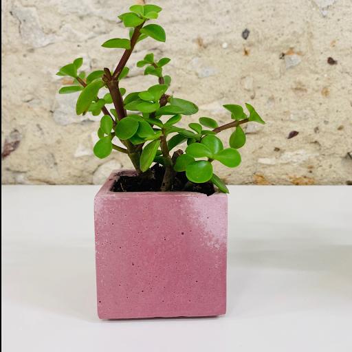 pot en béton coloré rose avec succulente