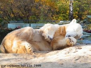 Photo: Schoenheitsschlaf kann auch nicht schaden ;-)