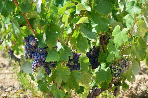 Conheça o segredo do terroir francês: Champagne, Borgonha, Vale do Loire