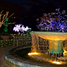 Holiday Lighting At Atlanta Botanical Gardens by Victoria Eversole - City,  Street & Park  Night ( night photography, chilulli fountain, christmas lights, landscape )