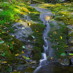 Water path by Mehdi Laraqui - Nature Up Close Water ( water, nature, waterscape, green, waterfall, nature up close, forest, wet., motion, river )