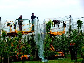 Photo: netten over het fruit hangen