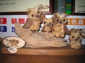 Photo: 日月潭特有種---貓頭鷹