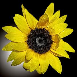 OLI flower 14 by Michael Moore - Flowers Single Flower (  )