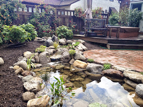 Photo: Koi Pond Design, #BackyardPonds, #PondRepair, Water Garden, Maintenance, Landscape Design, Pond Lighting, Landscape Lighting, Pond Clean-out, Pond Contractor, Installation, Pond Installer, Garden Pond Ideas, Natural Bluestone Wall, Aquascape Pond, Goldfish Pond, Pond Design, Renovation, Analysis, Consultation by Acorn Ponds & Waterfalls of Rochester NY,Certified Aquascape Contractor since 2004.  Check out our website www.acornponds.com and give us a call 585.442.6373.  For more info about Emily's amazing project please click here: www.facebook.com/notes/acorn-landscaping-landscape-designlightingbackyard-water-gardens/water-garden-pond-landscape-design-lighting-paver-patio-renovation-in-rochester-/461394557231005?__req=19  For more info on Ecosystem Pond Installations please click here: www.acornponds.com/ponds.html  Service areas include Rochester NY, Webster NY, Greece NY, Brighton NY, Pittsford NY, Penfield NY, Fairport NY, Irondequoit NY, Victor NY, Rush NY, Henrietta NY, Bushnell's Basin NY  To learn more about Acorn Ponds & Waterfalls Services, please click here: www.acornponds.com/services.html  Check out our photo albums on Pinterest here: www.pinterest.com/acornlandscape/  Click here for a free Magazine all about Ponds and Water Features: http://flip.it/gsrNN  To see more of our #pondinstallations on Facebook click here: www.facebook.com/media/set/?set=a.464911070212687.94604.103109283059536&type=3  Sign up for your personal design consultation here: www.acornponds.com/contact-us.html  Acorn Ponds & Waterfalls  585.442.6373 www.acornponds.com