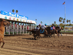 Photo: In addition to wiener dog races March 15th, Turf Paradise also had a full card of live horse racing, including two stakes races. Photo by Turf Paradise