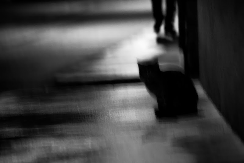 Il gatto nero di vaiolet