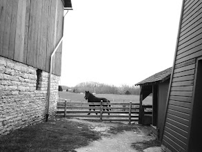 Photo: Black and white photo of a horse by barns at Carriage Hill Metropark in Dayton, Ohio.