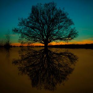 Drvo zalazak reflex.jpg