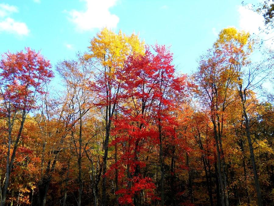 by Bo Bo - Nature Up Close Trees & Bushes ( pwcautumn )