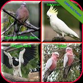 Birds Sound Animal