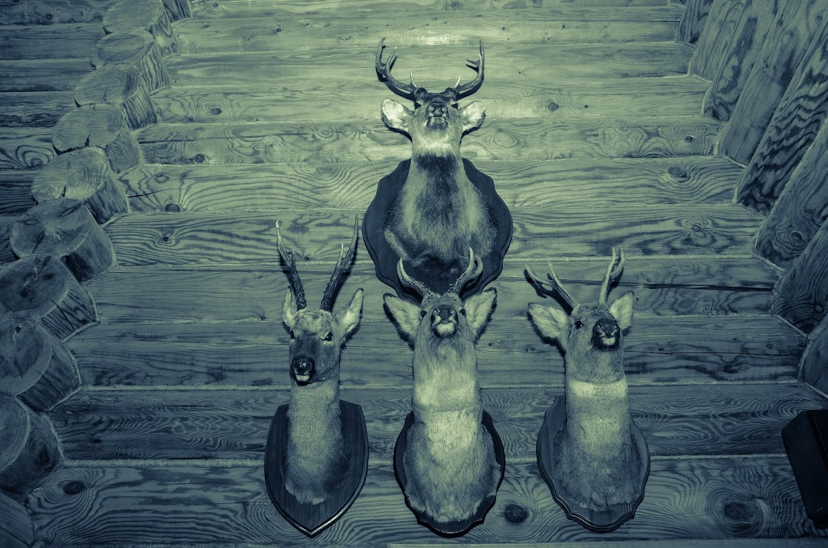 Охотничья усадьба в Самарской области