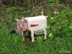 Photo: (Year 2) Day 349 - Pippa Pig Letter Box