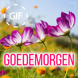 Dutch Good Morning Good Day Gifs Images Apk Download