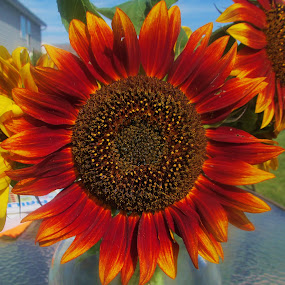 by Donna Schmidt - Flowers Flower Arangements