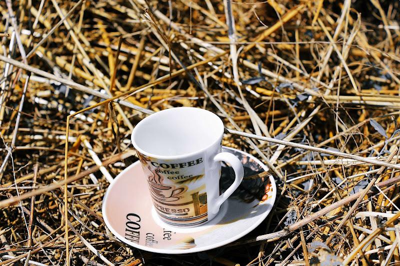 Caffè in campagna di crypto85
