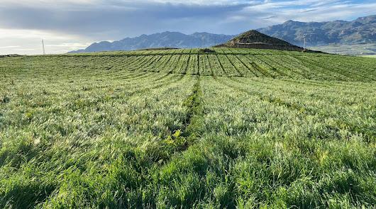 Bio Campojoyma cultiva 160 hectáreas de limón ecológico en Níjar y Los Gallardos