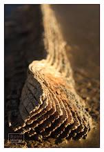 Photo: Eastern Sierras-20120715-64