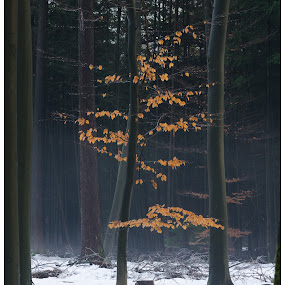 Little colour by Nico Sinselmeijer - Landscapes Forests ( speuld, winter, sneeuw )