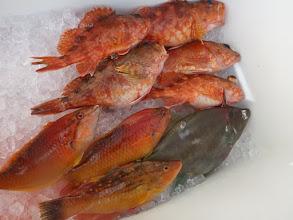 Photo: アラカブも5匹キャッチ! ・・・ウキ流し釣りでアラカブはなかなか こないんですが。 さすが!