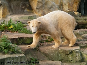 Photo: Knut auf Anlagenspaziergang ;-)