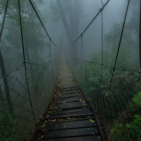 Way to Nowhere by Prabir Adhikary - Landscapes Forests ( adventurous, hanging bridge, dense fog, foggy, canopy, thrilling, lolegaon, cloudy, forest, woods,  )